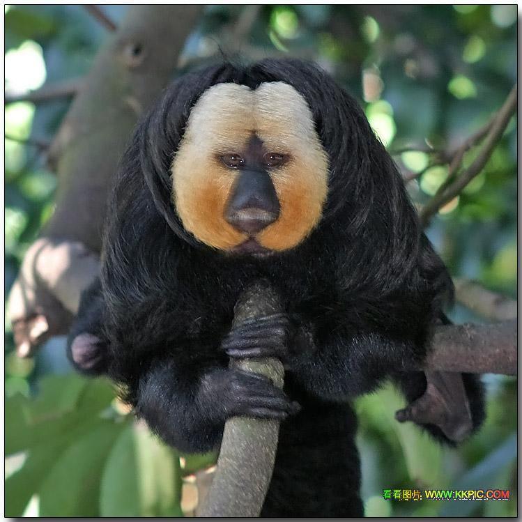 跗猴数量很少,是濒临绝种的动物.