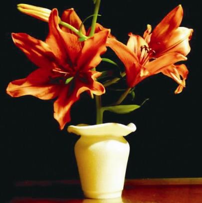 泡沫塑料杯子变花瓶作文-塑料汽水瓶怎样变花瓶