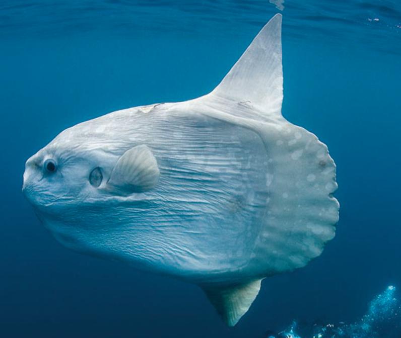 奇特海洋生物大搜罗
